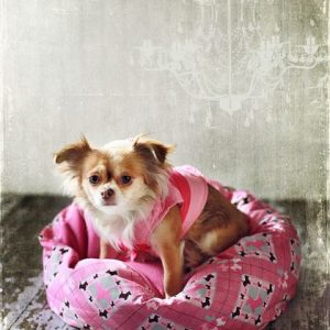 marshmallow pet bed sewing pattern